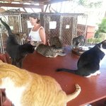 """LARC Lanai, cats hanging out in the """"dining hall""""..."""