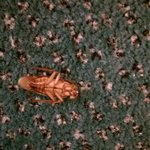 Cockroach-note green carpet from La Quinta