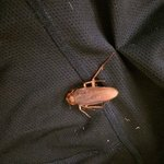 Cockroach in clothes