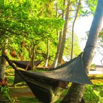 This is one of their awesome hammocks! So easy to put up, and comfy! Built in bug protection!