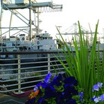 Cranes, the Presidential Yacht Potomac, and blooming flowers. Just another beautiful day in JLS