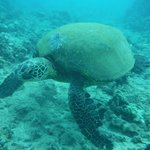 You can only get this close by trying out the EO Wai'anae tour