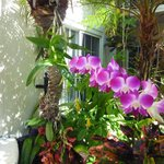 Orchids growing out of Palms - Beautiful Pool Patio!!