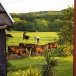 Photo of Rosemoor Country Cottages and Nature Reserve