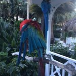 parrots near the pool