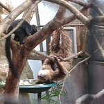 Sloth and baby, very cute, but the cage could be better