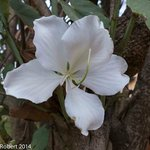 Photo of Aux Bougainvilliers
