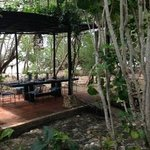 Dining surrounded by nature....