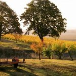 Drive up the road and pass through the oak trees to our tasting room