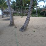 Volleyball court [note palm tree]