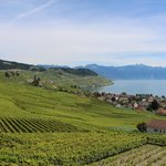 Lavaux Vineyard Terraces- breathtaking!