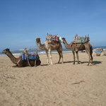 Camel rides on the beach...two hour ride for less than $20USD