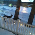 Even the deer come for breakfast