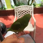 A pet parrot at the courtyard of hotel La Casona