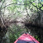 Photo de Tour the Glades - Private Wildlife Tours