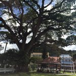 The noted Tree - reputed to be 400 years old