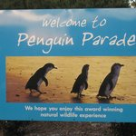 Photo de Penguin Parade