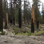 Along the trail of Devil's Postpile