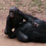 Photo de Lola ya Bonobo