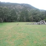 Halls Gap Log Cabins Foto