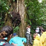 carlos in the rainforest on the Arenal volcano tour