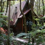 Foto de The Mouses House Rainforest Retreat