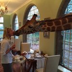 It was so much fun feeding the giraffes that we almost forgot to feed ourselves....
