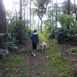 walk in the coffee estate with muffin