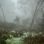 Mt Donna Buang