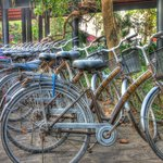 Bicycles for free rental