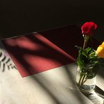 Roses in the afternoon sun