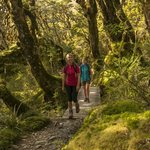 Ultimate Hikes Guided Walks