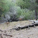 Deer near the cabins