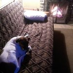 The pup enjoying the fireplace