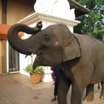 Photo de Anantara Golden Triangle Elephant Camp & Resort