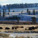 Yellowstone's Absaroka Lodge Foto