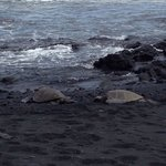 Two green turtles on the black sand beach. Perfect!