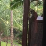 Monkey outside balcony