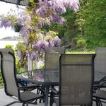 Wisteria in bloom at the Lodge at Weir's Beach