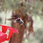 The hummingbirds entertained us as we sat and ate breakfast.