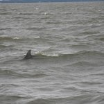 A dolphin seen from the boat