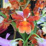 Orchids are available for sale and scattered around the estate.