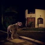 Buddy the dog outside our villa at night