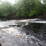 The Steinhatchee Falls is only a few minutes from the Steinhatchee Landing