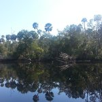 Old Florida along the Steinhatchee River banks