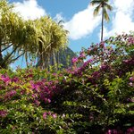View of the Pitons through flowers