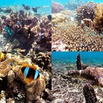 Snorkeling at Tanikely