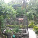 Photo of Mayas Native Garden