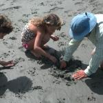 digging for fitler crabs