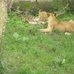 Photo of Odense Zoo
